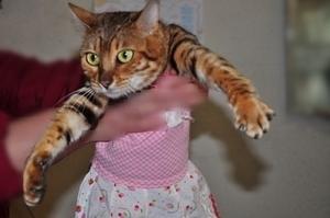 20110215_cats03