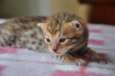 20110428_kittens15
