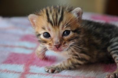 20110428_kittens20