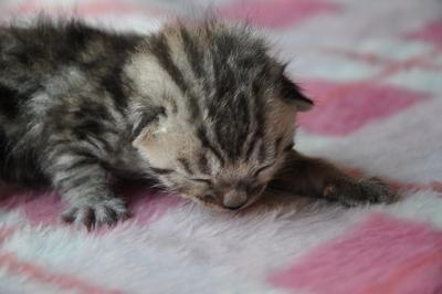 20110428_kittens25