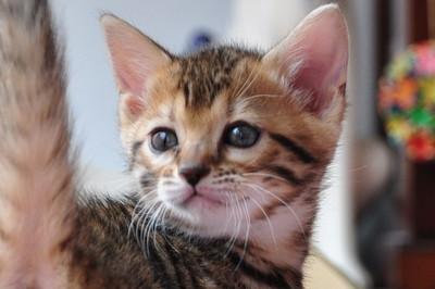 20120513_kittens25