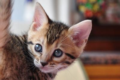 20120513_kittens26