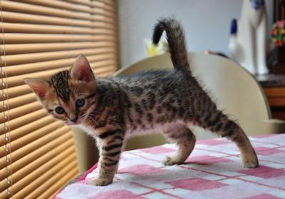20120513_kittens31