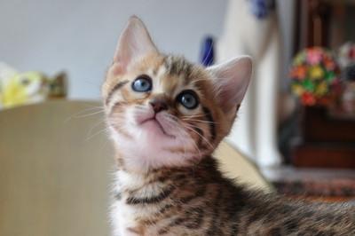 20120513_kittens42