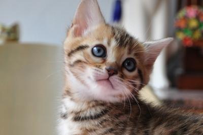 20120513_kittens43