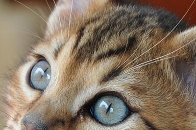 20120513_kittens54