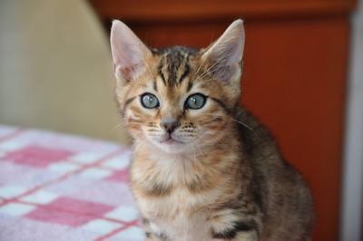 20120513_kittens51