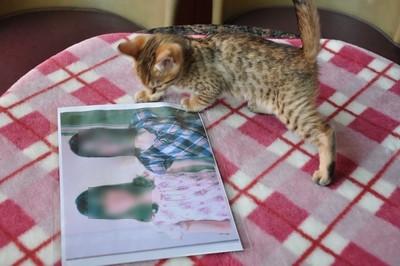 20120606_kittens01