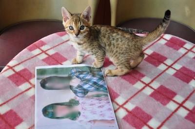 20120606_kittens03