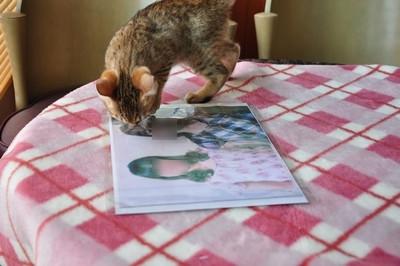 20120606_kittens04