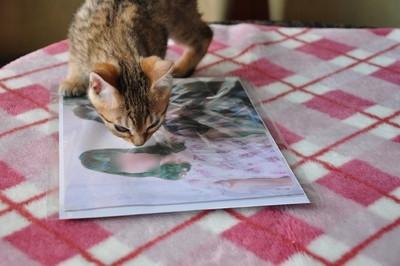 20120606_kittens05