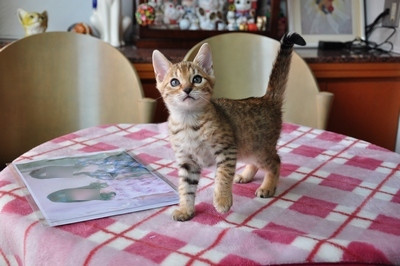 20120606_kittens10