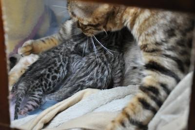 20120629_kittens04