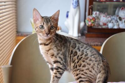 20120708_kittens37