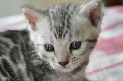 20120720_kittens06