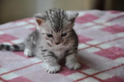 20120720_kittens09