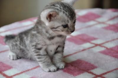 20120720_kittens10