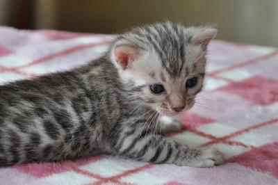 20120720_kittens34