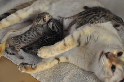 20120727_kittens34