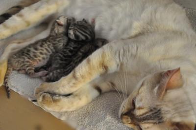 20120727_kittens35