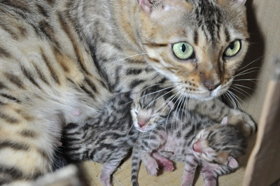 20120727_kittens36