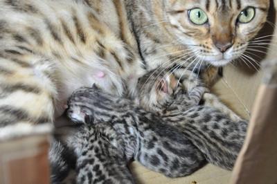 20120727_kittens37