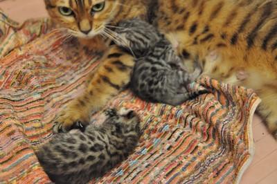 20120820_kittens02