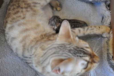 20120820_kittens05
