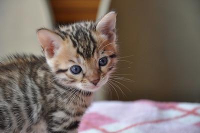 20120825_kittens35