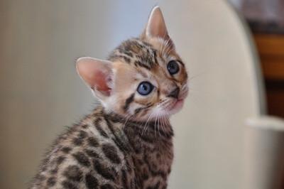 20120825_kittens45