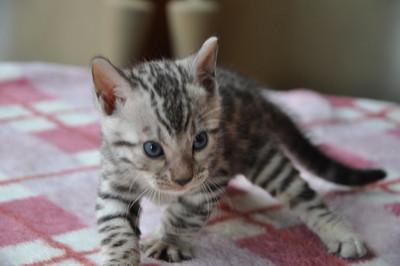20120825_kittens60
