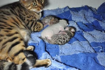 20120825_kittens64