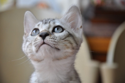20121006_kittens06