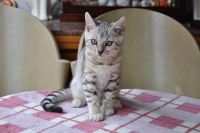 20121006_kittens15