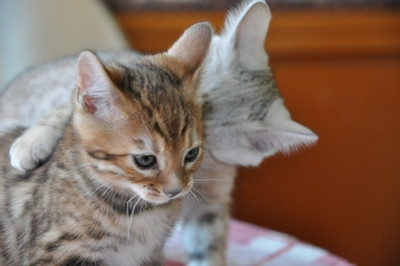 20121029_kittens19