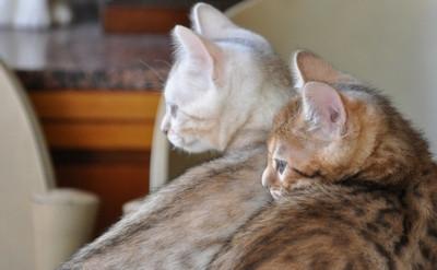 20121029_kittens21
