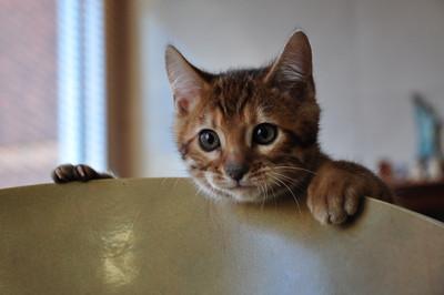 20121116_kittens12