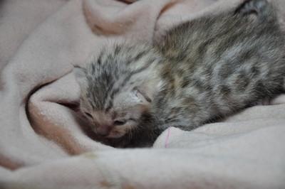 20121127_kittens01
