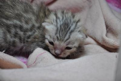 20121127_kittens04