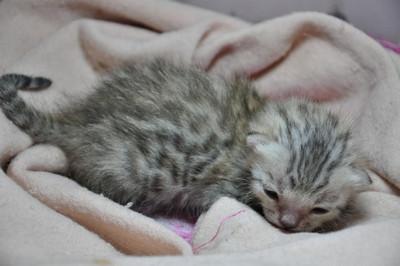 20121127_kittens06