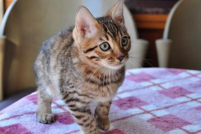 20121127_kittens14