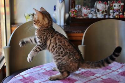 20121127_kittens19