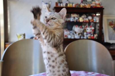 20121127_kittens35