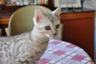 20121127_kittens41