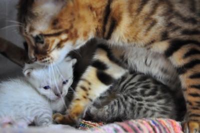 20121231_kittens01