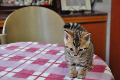 20130218_kittens35