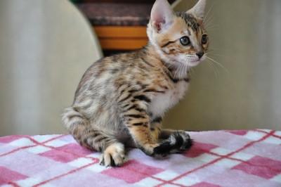 20131023_kittens037