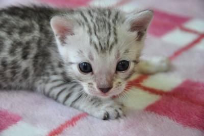 20131023_kittens121