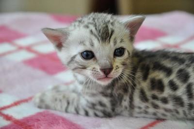 20131023_kittens127