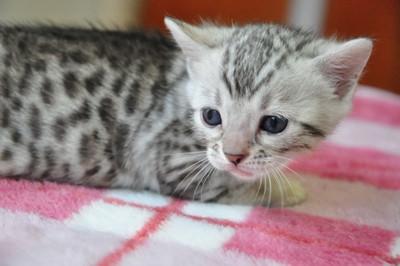 20131023_kittens142